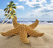 Starfish On The Beach,Close Up stock photography