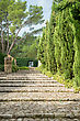 Stone Staircase With Trees In Park stock image
