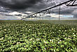 Storm Clouds Saskatchewan And Srinkler Watering Crops stock photo