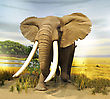 Museum Stuffed African Elephant stock photo