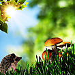 Summer Beauty Day In The Forest. Natural Backgrounds With Beauty Bokeh stock image