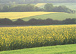 Summer Fields with Blooming Crops stock image