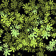Summer Floral Texture Isolated On Black Background. Seamless Different Leaves Pattern