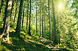 Summer Forest With Bight Yellow Sun On The Skies stock photography