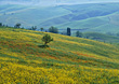 Summer Hills, Tuscany, Italy stock photo