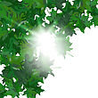 Summer Maple Leaves. EPS 10 Vector Illustration With Transparency And Meshes stock illustration
