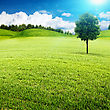 Summer Meadow. Abstract Environmental Landscape For Your Design stock illustration