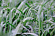Summer Picture Of Green Saturate Grass Texture stock image