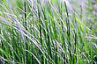 Dewy Summer Picture Of Green Saturate Grass Texture stock image