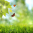 Summer Time. Abstract Optimistic Backgrounds With Flying Butterfly stock photo