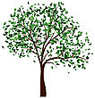 Canadian Summer Tree With Green Leaves. EPS 10 Vector Illustration stock vector