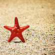 Summer Vacations Starfish Sea Sand Beach stock photo