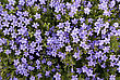 Summer Violet E Lilac Camomile On Green Leaves stock photography