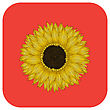 Sunflower Icon, Isolated Object Over White Background