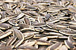Sunflower Seeds As A Background. stock image