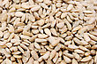 Sunflower Seeds Closeup Picture. stock photography