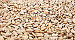 Tracery Sunflower Seeds Closeup Picture. stock photography