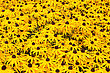 Sunny Field With Yellow Flowering Black Eyed Susan Plants stock photography