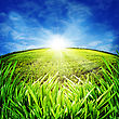 Sunny Morning On The Meadow. Rural Abstract Backgrounds stock photo