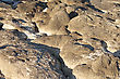 Surface Of The Rock Beach. Close-up. stock photography