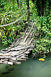 Suspension Bridge Over A Reservoir With Fishes In Catfish Farm In Thailand