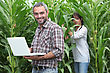 Sweetcorn Farmers stock photo