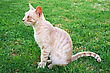 Tawny Cat On Green Grass stock photo