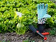 Tempting Gardening Work - Colorful Tools And Salad Bed stock image