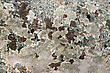 Texture Of Natural Brown-spotted Pink Granite Stone With Patches Of Moss stock image