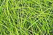 Landscape Texture Of The Green Fresh Grass stock photo