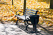 There Is In Autumn Park An Empty Bench