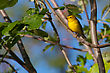 This Goldfinch Perched And Relaxing In The Sun stock photo