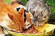Cats & Kittens Three Cats Having A Breakfast stock photo