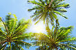 Three Palms On The Blue Sky Background stock photo