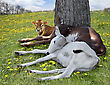 Three Young Calves Resting Under Tree stock photography