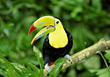 Toucan stock photo