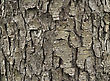 Tree Bark , Close Up Shot For Background stock image