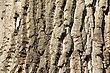 Tree Bark Texture. Background. Close Up stock image