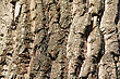 Tree Bark Texture. Background. Close Up stock photo