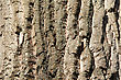 Tree Bark Texture. Background. Close Up stock photography