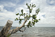 Tree Branch Over Ocean Horizon stock photography