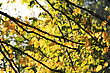 Tree Branch With Yellow Leaves In Autumn Park. Background stock image