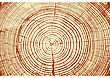 Tree Rings Saw Cut Tree Trunk Background. Vector Illustration stock image