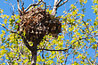 Tree Squirrel Nest High Up In A Leafy Tree In Soft Focus stock photography