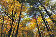 Tree tops in Fall stock photography