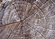 Tree Trunk Cross Section, Weathered stock photo