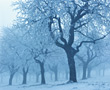 Trees Covered With Ice & Snow stock photography