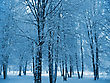 Trees In A Winter Park stock photography