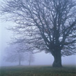 Trees In Morning Fog stock photography