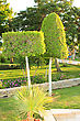 Trimmed Trees In The Park. Ornamental Green Trees Nearly Trimmed stock photo